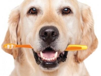 boca sana perro