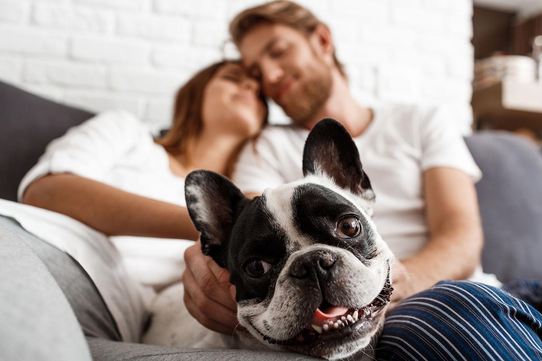 pareja-con-perro-en-sofa
