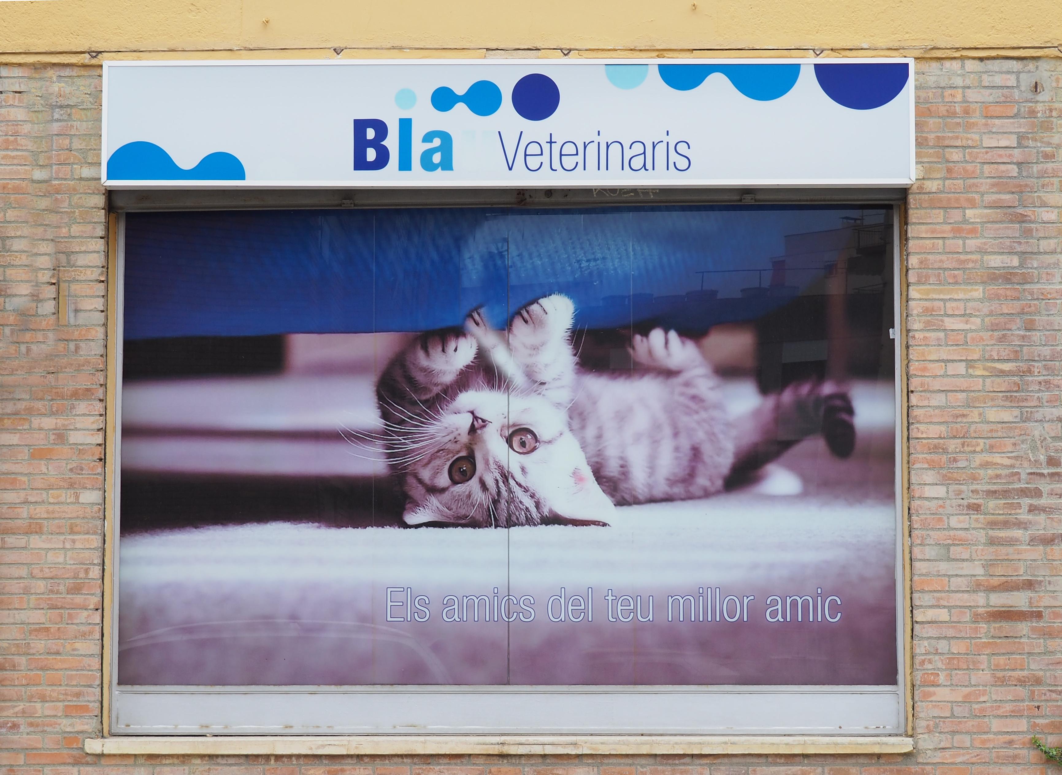 fachada-gato-centro-veterinario-arenys-de-mar