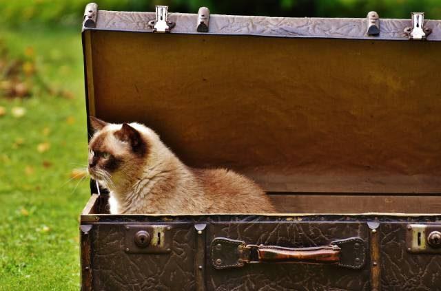 Gato Viatjant En Una Maleta